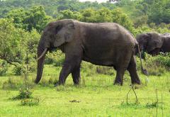 1280px-Elefant_Ghana.jpg