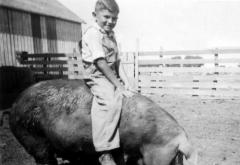 Iowa_Farm_Boy_riding_hog,_1941.jpg