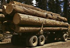 Truck_load_of_ponderosa_pine_July_1942.jpg