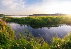 Wetlands_(Moscow,_Russia).jpg