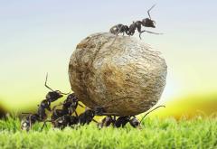 Sisyphean Ants