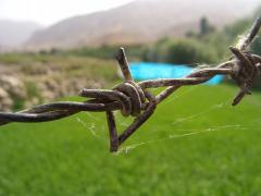 800px-Barbed_Wire_1.JPG
