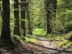 Forest_path_in_Yvelines_-_France.jpg
