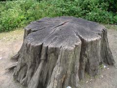 Tree_stump1_30u06.JPG