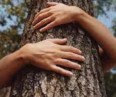 Treehugging.jpg