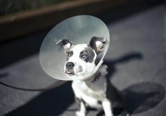 dog_Cone.jpg