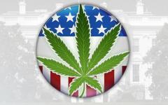 marijuanaButton.jpg