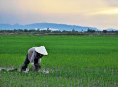 ricefarmer.PNG