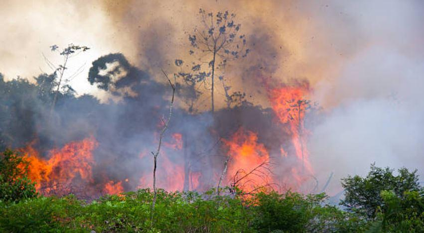 Brazilian Socialism Shows Us How Not To Take Care of Forests